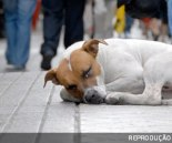 animal cachorro abandonado1