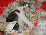 gato dinheiro