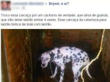 facebookdog
